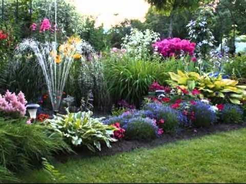 Популярные декоративные растения для сада