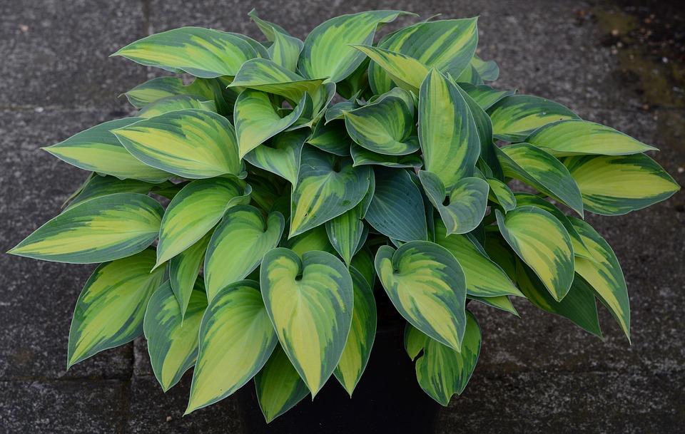 Популярные многолетние растения